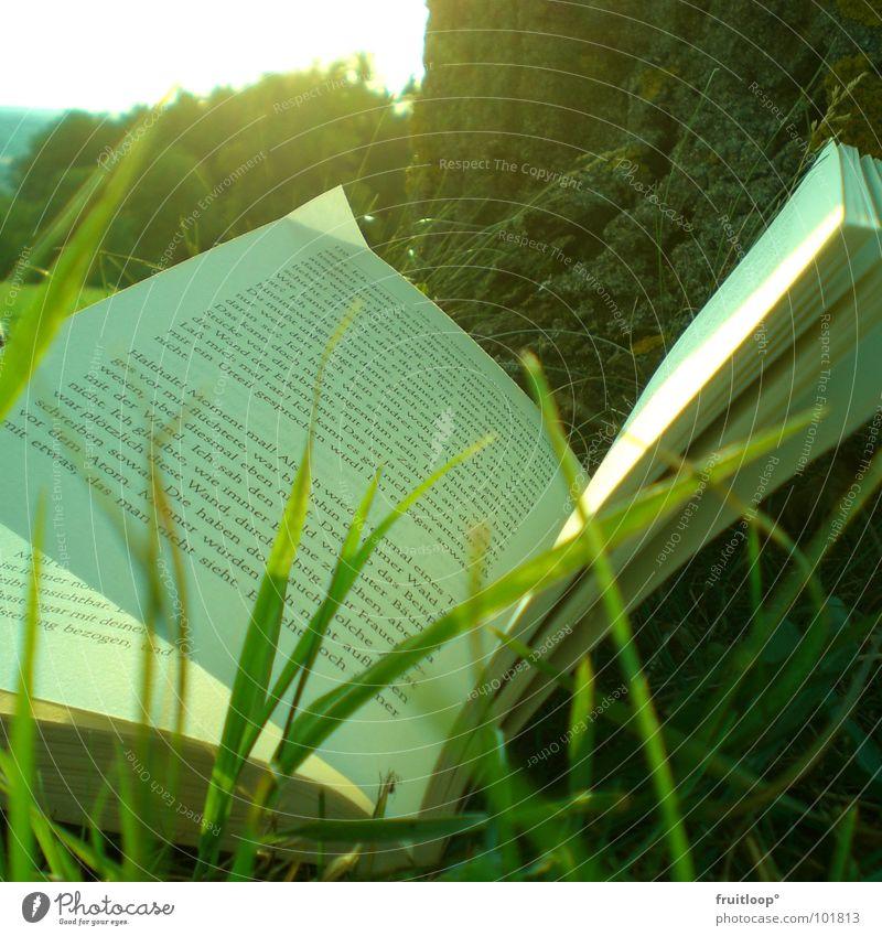 AlltagsOASE Baum Sonne Ferien & Urlaub & Reisen Wiese Buch Pause Freizeit & Hobby genießen gemütlich Tagtraum