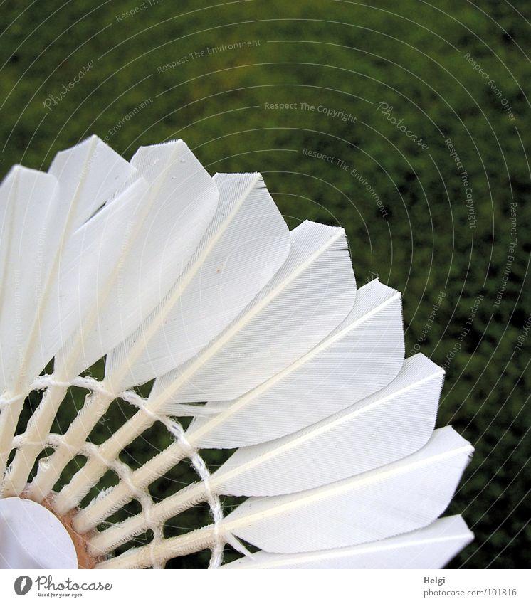Detailaufnahme von Federn eines Federballes vor grünem Rasen Badminton weiß Spielen Freizeit & Hobby Makroaufnahme Nahaufnahme Kiel Anschnitt Bildausschnitt