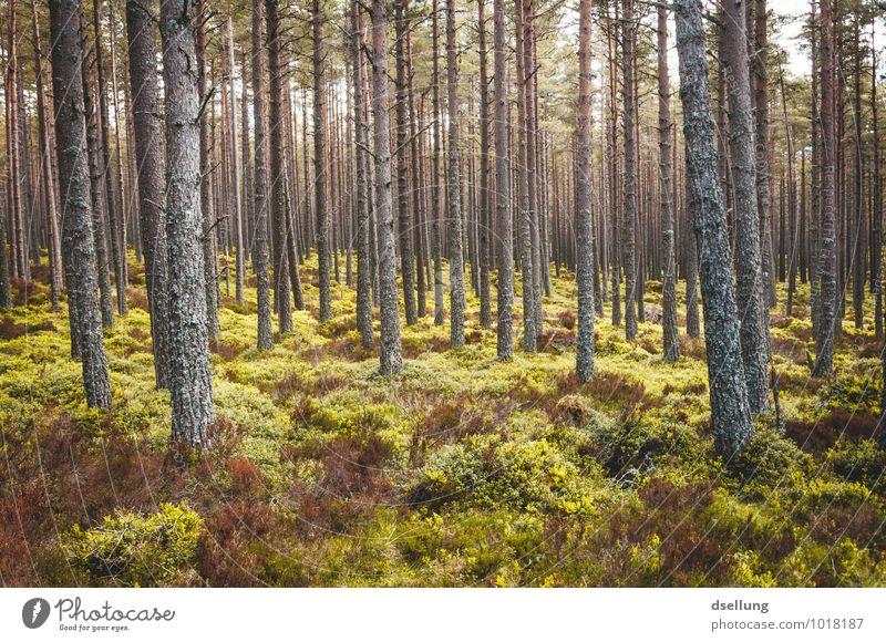 genug für alle da. Umwelt Natur Landschaft Pflanze Frühling Sommer Herbst Klima Schönes Wetter Baum Sträucher Moos Wald Gesundheit groß hoch nachhaltig