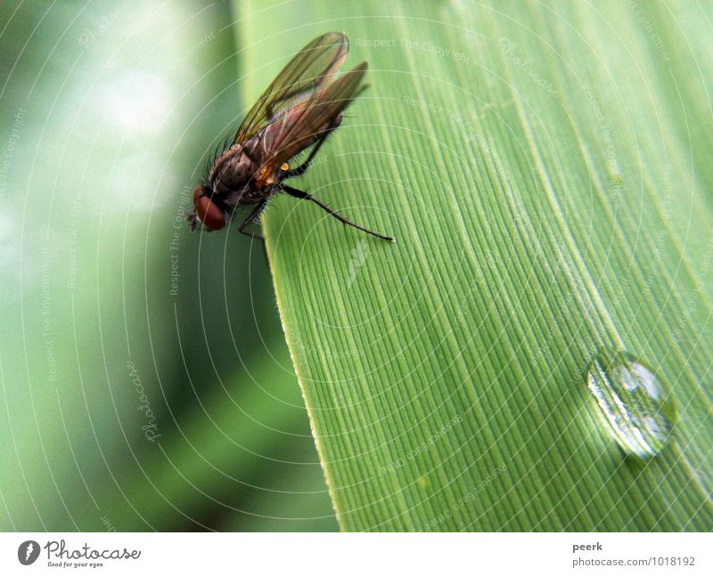 Fliege auf Schilfblatt Frühling Sommer Klima Klimawandel Pflanze Gras Sträucher Moor Sumpf Teich See Tier 1 authentisch frisch grün Farbfoto Außenaufnahme