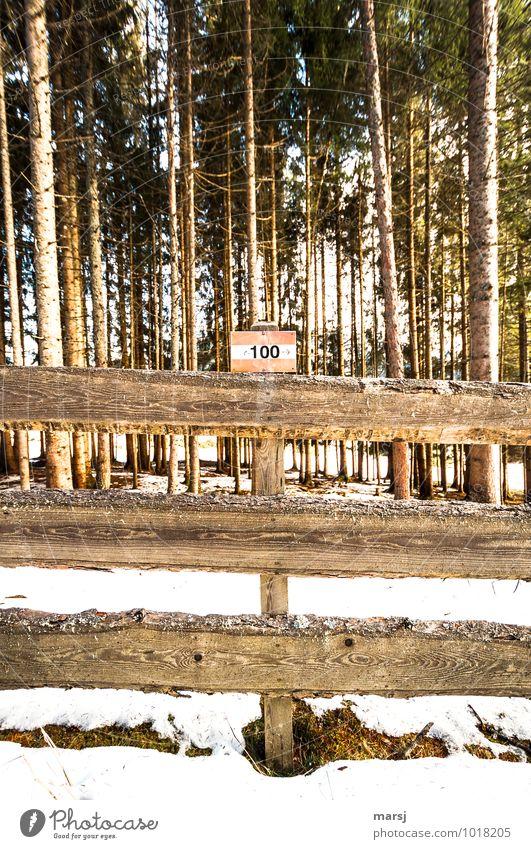 100er Weg Ausflug wandern Natur Winter Wald Holz Zeichen Ziffern & Zahlen Schilder & Markierungen Hinweisschild Warnschild trist Einsamkeit Ordnung Wegweiser