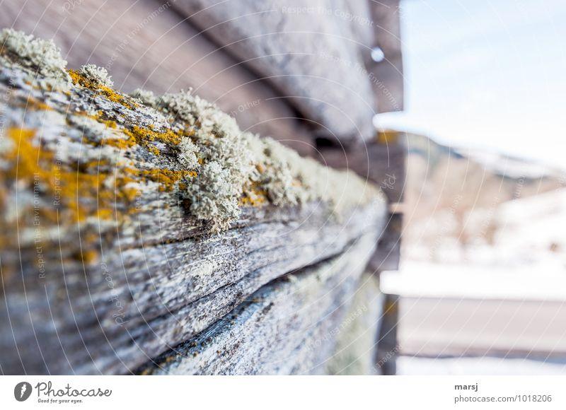 Schmarotzer alt Haus Wand natürlich Mauer Holz Hütte Verfall Riss Moos bleich verwittert Holzwand Flechten Wildpflanze Balken