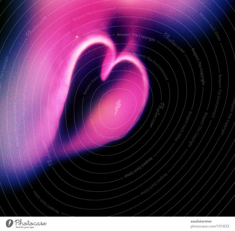 love Natur Weihnachten & Advent Blume Pflanze Liebe schwarz Gefühle Blüte Herz rosa Leidenschaft Makroaufnahme Valentinstag Frühlingsgefühle