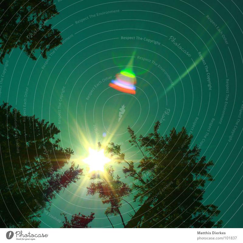 RAINBOW COLOURS Wald Baum Beleuchtung Sommer Regenbogen grün rot violett regenbogenfarben schön bezaubernd wandern grell Kostbarkeit Wert Sonnenbrille Allgäu