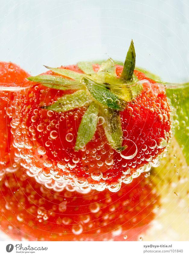 Erdbeere rot frisch Sommer Pflanze Getränk Frucht Ernährung Vegetarische Ernährung Detailaufnahme Erdbeeren Beeren strawberry lemon Limone bubbles Wasser