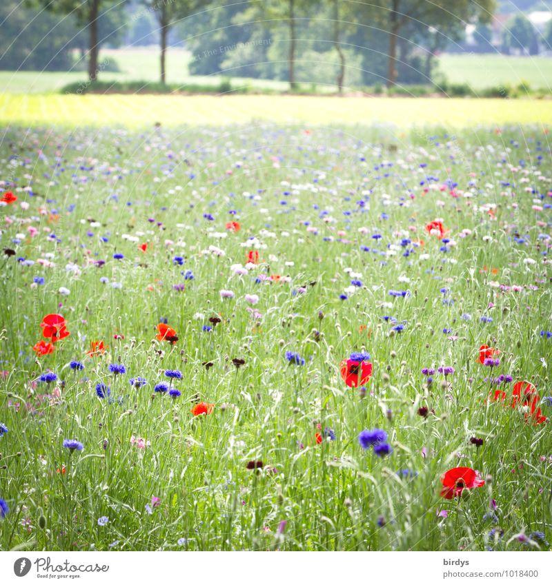 Frühlingsgefühle Landschaft Pflanze Sommer Schönes Wetter Baum Blume Blumenwiese Mohn Wiese Blühend Duft ästhetisch Freundlichkeit positiv schön mehrfarbig grün