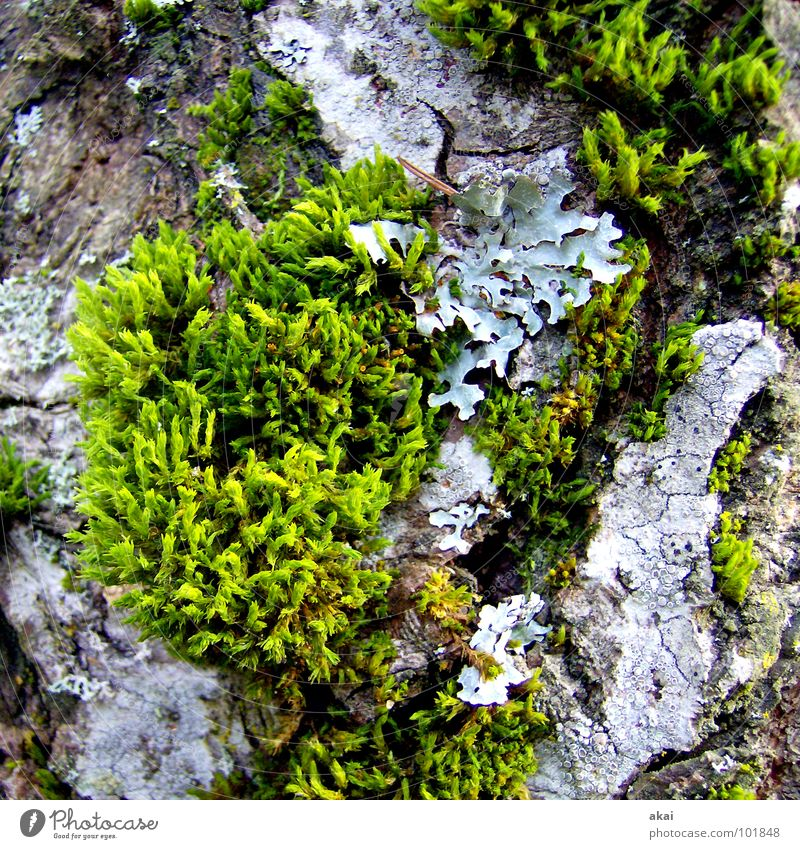 Ohne Moos nix los Natur schön grün Pflanze Wachstum Landwirtschaft Botanik Schwarzwald binden Freiburg im Breisgau Reifezeit Feldberg