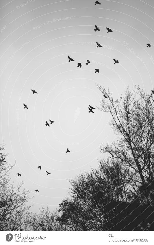 hochgucken Himmel Natur Baum Landschaft Tier Winter Wald Umwelt Herbst Freiheit fliegen Vogel Wetter frei Klima Flügel
