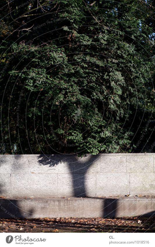 baum Umwelt Natur Landschaft Urelemente Erde Herbst Klima Klimawandel Wetter Schönes Wetter Baum Blatt Baumstamm Mauer Wand Wachstum einzigartig braun grün
