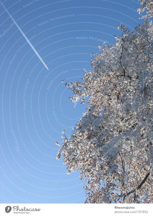 Eisvogel Flugzeug Baum Winter Schnee Himmel Natur Technik & Technologie
