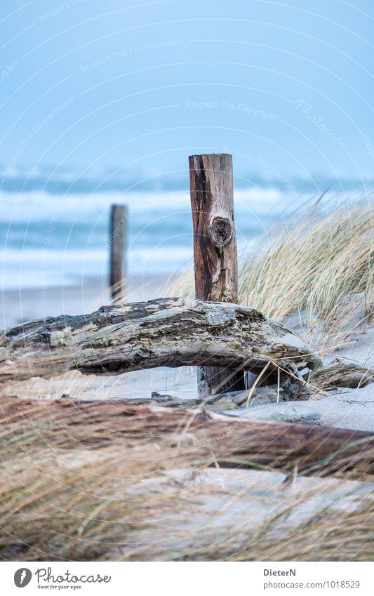 Strandgut Natur Landschaft Sand Himmel Wolkenloser Himmel Horizont Pflanze Gras Küste Ostsee blau braun gelb Darß Mecklenburg-Vorpommern Stranddüne Dünengras