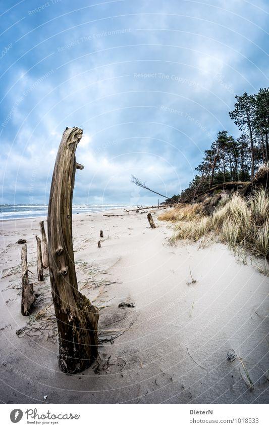 Weststrand Himmel Natur blau Baum Meer Landschaft Wolken Strand schwarz Umwelt Küste Gras Sand braun Wind Ostsee