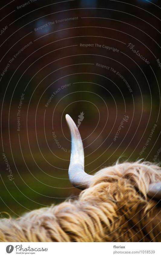 spitze waffe ruhig Tier grau braun Behaarung Angst Kraft warten Spitze bedrohlich Fell Wut Konzentration Wachsamkeit Gewalt Kontrolle
