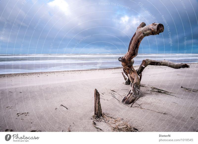 Gefällt Himmel blau weiß Wasser Baum Landschaft Wolken Strand schwarz Umwelt Küste braun Sand Horizont Ostsee Sandstrand