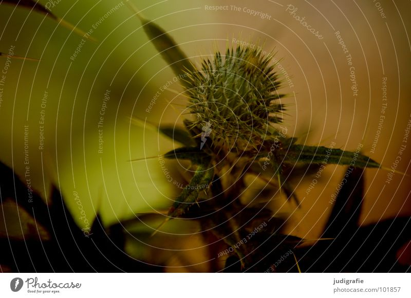 Wiese Natur schön Pflanze Sommer Blatt schwarz Farbe braun Umwelt Wachstum einfach Spitze Stengel Wildtier Stachel
