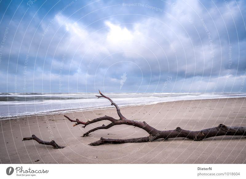 Gefallen Himmel Natur blau weiß Wasser Baum Meer Landschaft Wolken Strand Küste Sand braun Wetter Erde Wellen