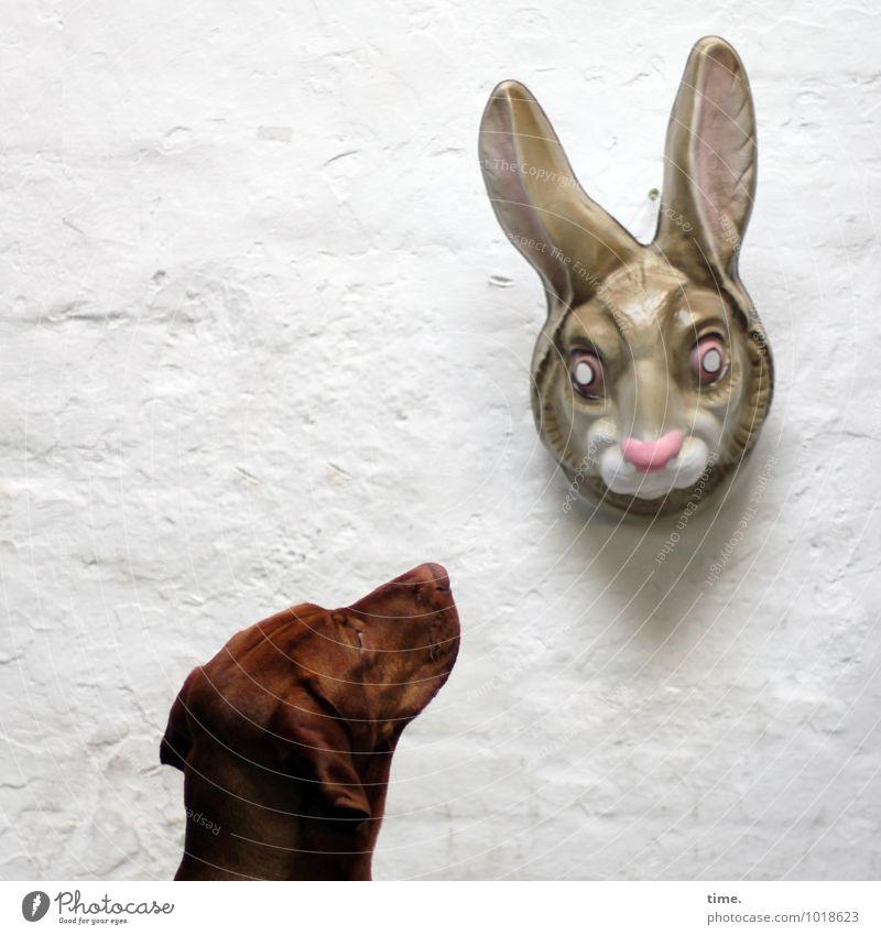 STUDIO TOUR | Der Fachmann staunt Hund Tier Wand Mauer Zeit Perspektive warten beobachten Kommunizieren Neugier Kunststoff Überraschung Fell entdecken Wachsamkeit Maske