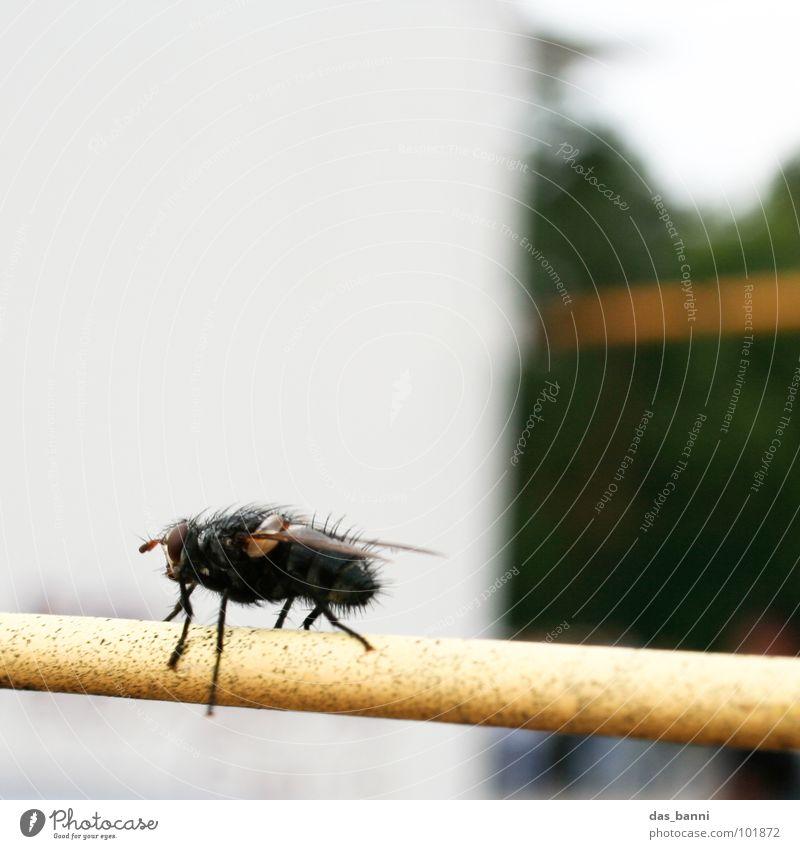 ein fliegenbild Natur grün Einsamkeit gelb Erholung Haare & Frisuren Wärme klein orange glänzend sitzen Fliege mehrere Flügel Physik