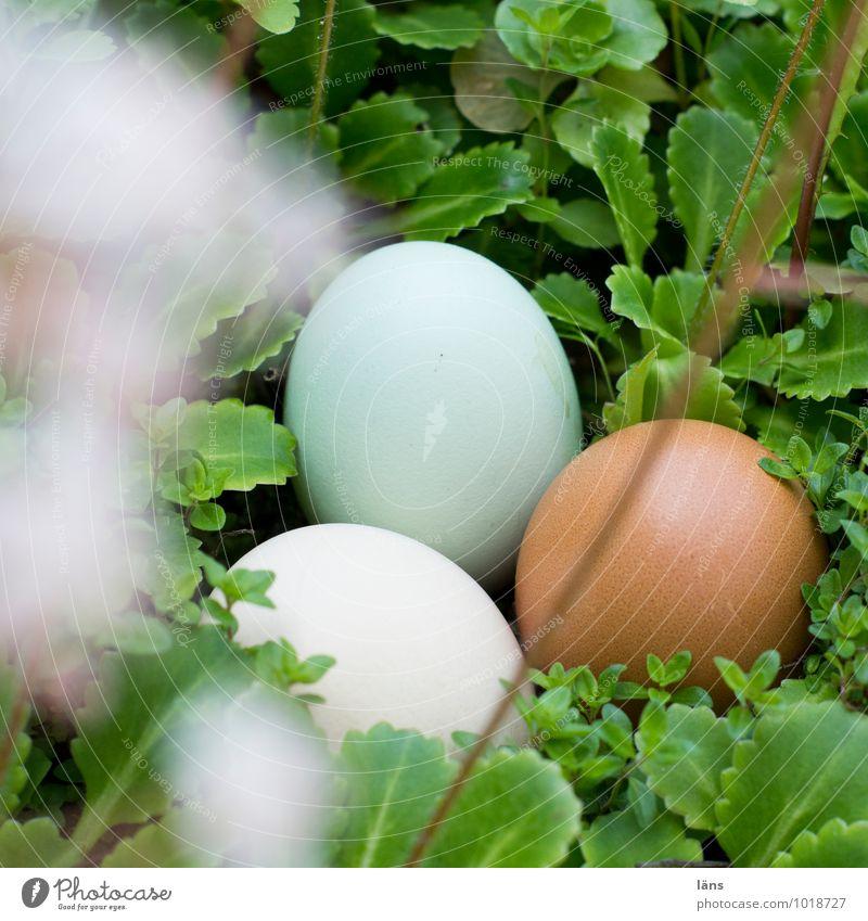 Ei Ei Ei Lebensmittel Eierschale Frühling Sommer Pflanze Wildpflanze liegen Geborgenheit Hoffnung Erwartung Zusammenhalt Suche Ostern Menschenleer