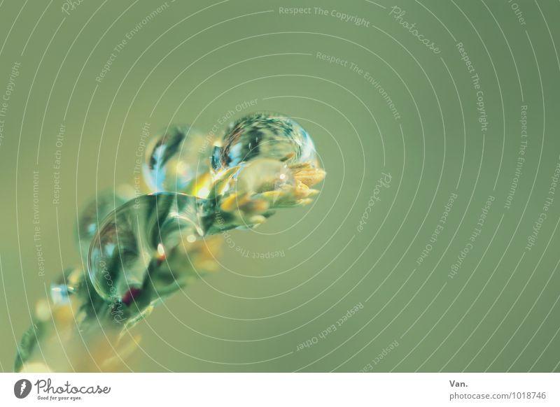 Sweetest Perfection Natur Pflanze Wassertropfen Sträucher Zweig frisch nass grün Farbfoto Gedeckte Farben Außenaufnahme Detailaufnahme Makroaufnahme