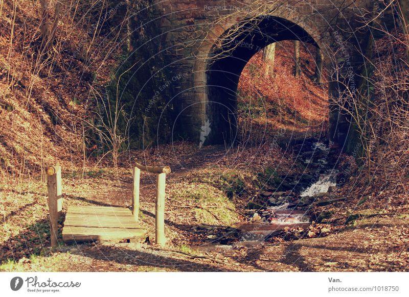 Tunnelblick Natur rot Blatt Wald Umwelt Herbst Gras Wege & Pfade braun Sträucher Brücke Steg Bach Unterführung
