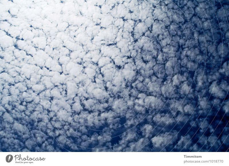 Himmelshirn. Natur blau Sommer Wolken Umwelt Gefühle natürlich ästhetisch Schönes Wetter Dänemark