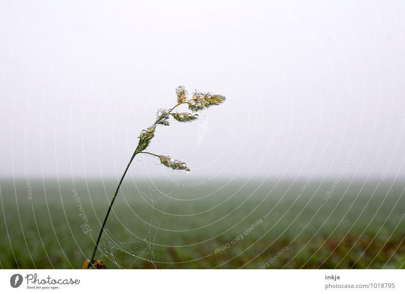 morgens früh auf den Feldern Natur Landschaft Pflanze Luft Wassertropfen Herbst Winter Nebel Eis Frost Gras Wiese frisch kalt nass grün Tau Farbfoto