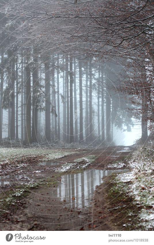 Nebelstimmung Natur Landschaft Pflanze Erde Winter Schnee Baum Gras Fichten und Buchen Feld Wald Waldrand Lichtung kalt nass natürlich schön blau braun grau