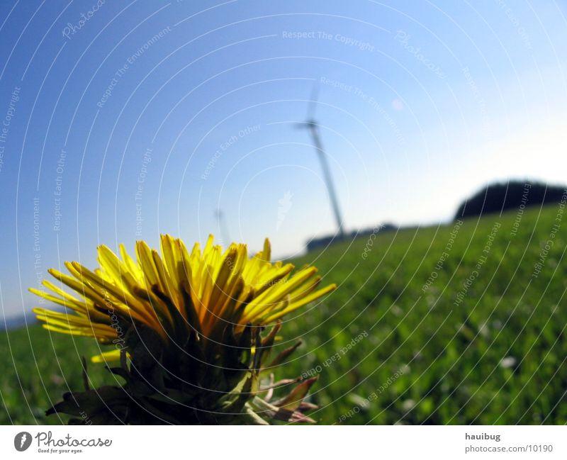 Blume im Wind Natur Sonne Blume Sommer Einsamkeit Wiese Glück träumen Fröhlichkeit nah Löwenzahn Allgäu Makroaufnahme