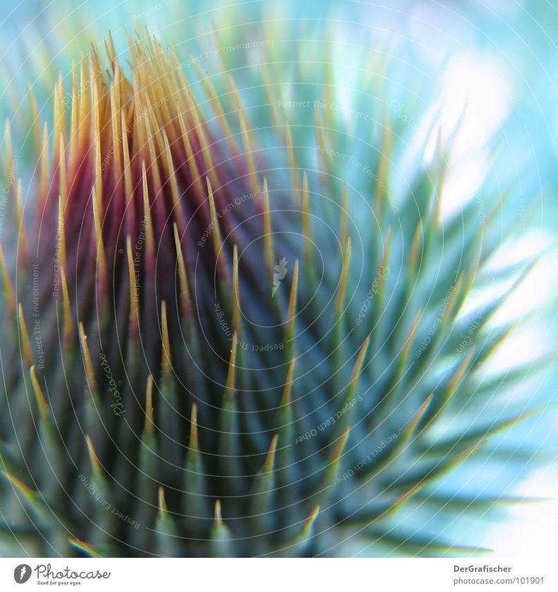 Komm nur Pflanze Tier gelb Blüte offen geschlossen Mund gefährlich Sicherheit bedrohlich rund Schutz violett Vertrauen Blühend Kugel