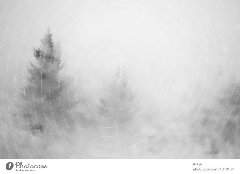 Sichtweite unter 50 Meter Umwelt Natur Winter Klima schlechtes Wetter Nebel Eis Frost Schnee Schneefall Tanne Nadelbaum Wald Berge u. Gebirge kalt nass matschig