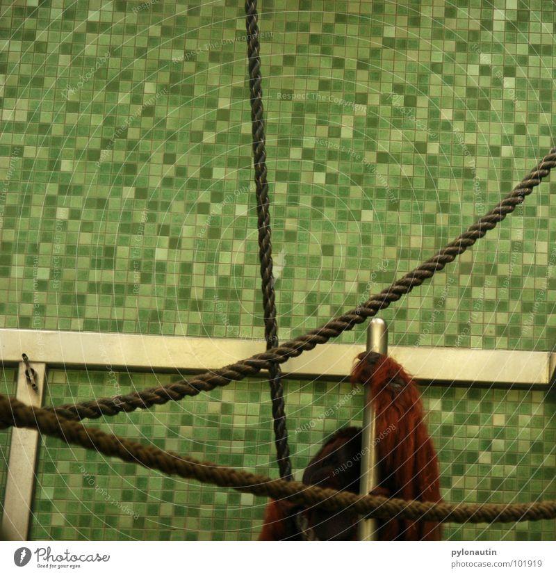 Kachelkäfig Affen Käfig Zoo Orang-Utan Tier grün weiß steril Hand Fell Säugetier Seil Klettern Fliesen u. Kacheln Metall