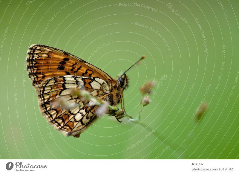 M.aurelia Natur schön grün Sommer Tier Wald Wiese natürlich Garten träumen orange frei ästhetisch Flügel Wandel & Veränderung Hoffnung