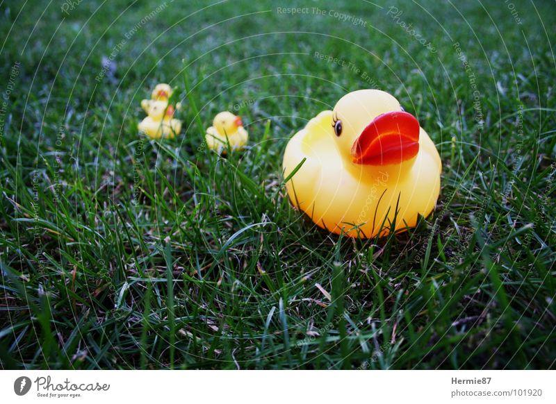 Grüner See grün Sommer gelb Gras Garten See Rasen Ente Badeente
