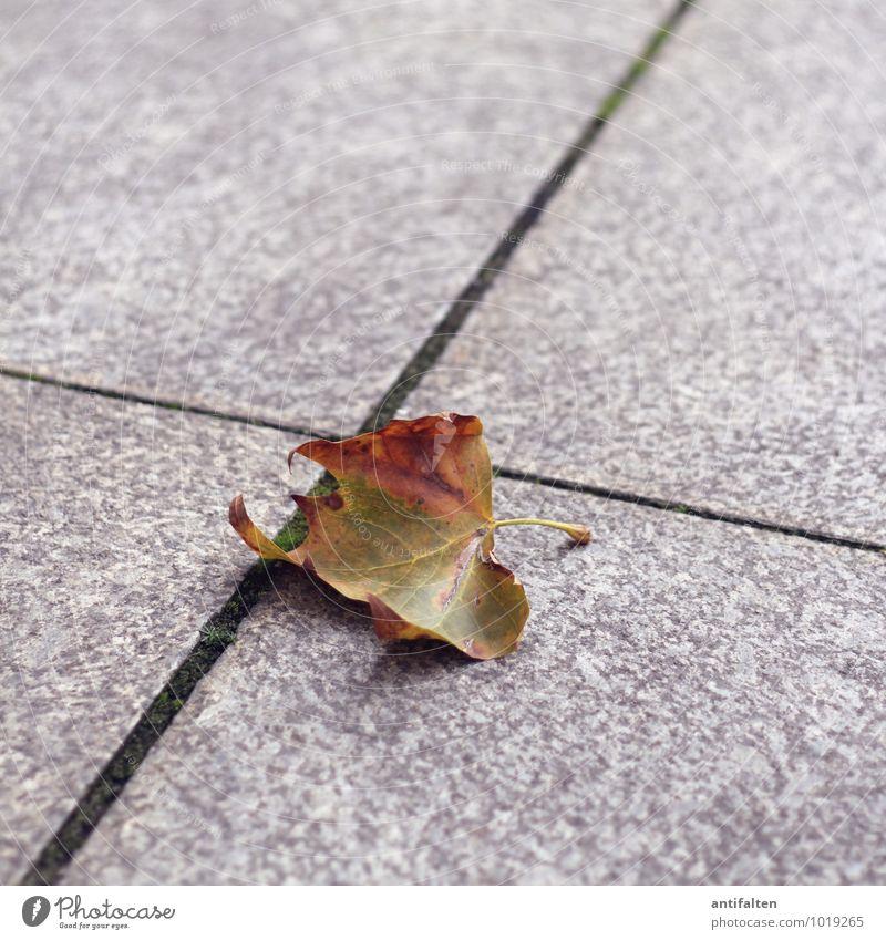 Herbst Natur Pflanze Tier Sonne Schönes Wetter Baum Blatt Herbstlaub herbstlich Herbstfärbung Herbstbeginn Blattgrün Blattadern Blattschatten Stengel Düsseldorf