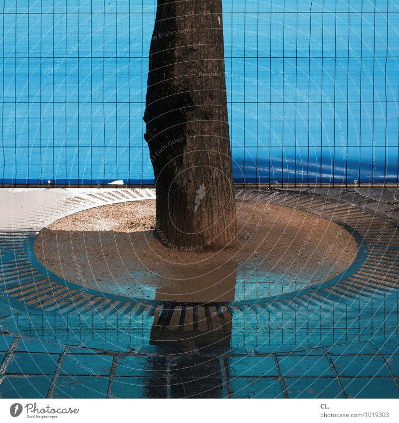 stamm Umwelt Natur Wasser Klima Wetter Regen Baum Baumstamm Zaun Bauzaun Wachstum stark blau Sicherheit Kraft Stabilität Farbfoto Außenaufnahme Menschenleer Tag