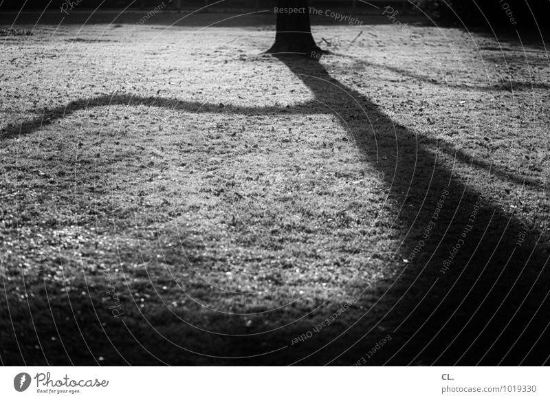 licht und schatten Umwelt Natur Urelemente Erde Herbst Winter Klima Wetter Schönes Wetter Baum Ast Park Wiese Wachstum dunkel groß Traurigkeit Einsamkeit