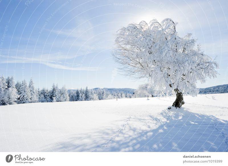 Vielleicht ja doch noch !? Natur Landschaft Wolkenloser Himmel Schönes Wetter Eis Frost Schnee Baum Wald Hügel hell blau weiß Erholung ruhig Menschenleer
