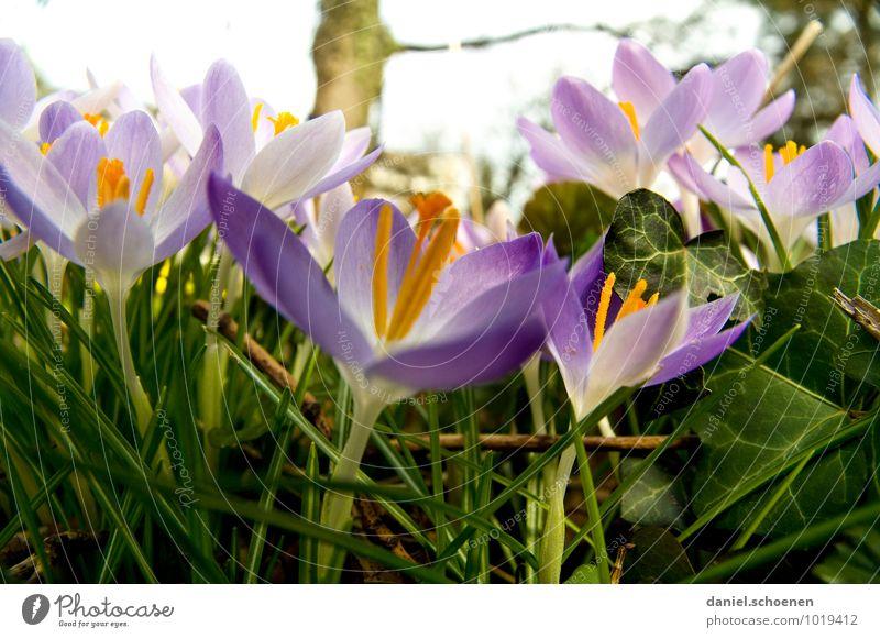 auf dem Bauch im Dreck Natur Pflanze grün weiß Blume Wiese Gras Frühling violett