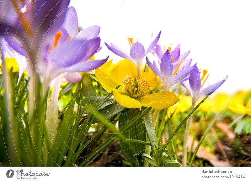 Regenwurmfrühling Pflanze grün Blatt gelb Gras Blüte Frühling violett
