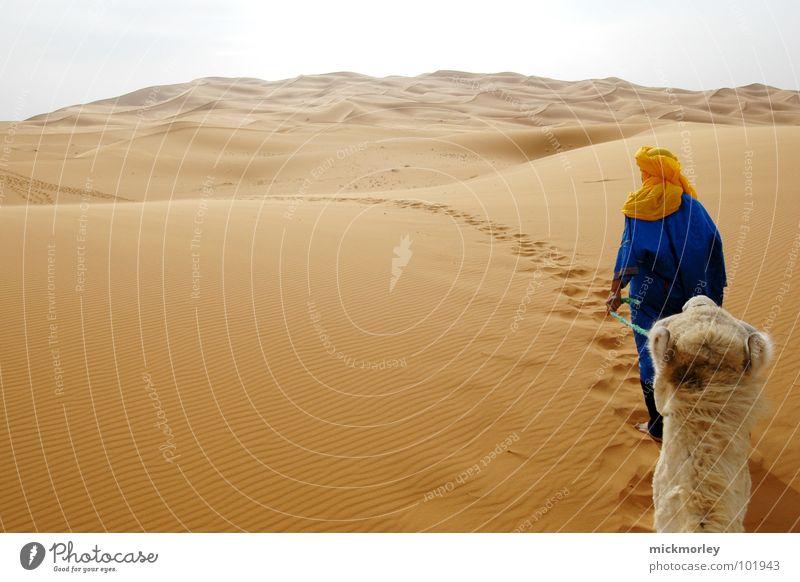 in der hitze des gefechts Marokko Kamel Dromedar Hügel Ferne wandern Ferien & Urlaub & Reisen Abenteuer Afrika führer desert Sand Korn Wege & Pfade path