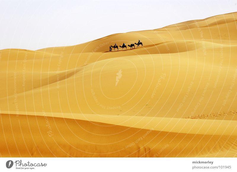 wanderung der krieger Himmel Ferien & Urlaub & Reisen Einsamkeit gelb Sand wandern Abenteuer Afrika Wüste heiß Stranddüne Norden Glut Kamel Marokko Dromedar
