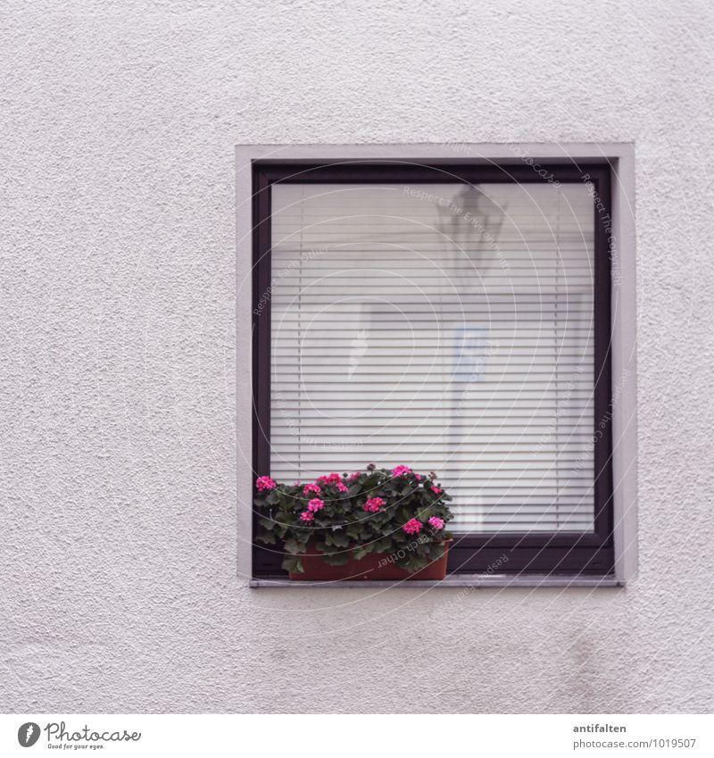 Trister Freitag Stadt weiß Haus Fenster Wand Mauer grau rosa Fassade Dekoration & Verzierung trist Schriftzeichen Blühend Zeichen Neugier Straßenbeleuchtung