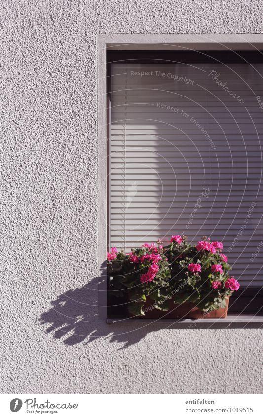 Die lieben Nachbarn Frühling Sommer Blume Blatt Blüte Topfpflanze Balkonpflanze Düsseldorf Stadt Stadtrand Haus Mauer Wand Fassade Fenster Fensterscheibe