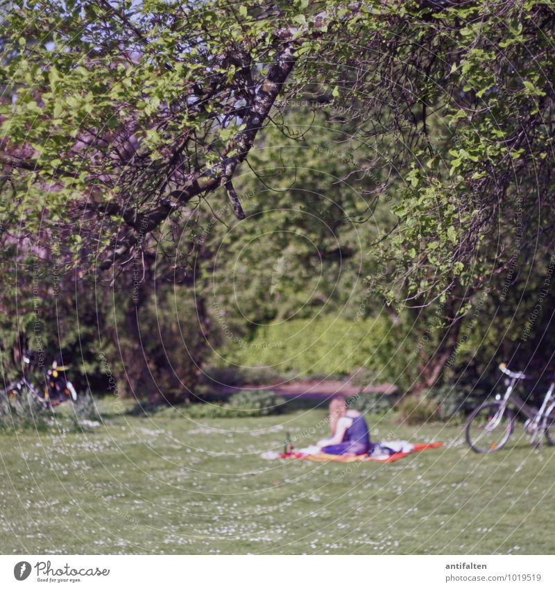 Sommer Mensch Natur Jugendliche Pflanze Sonne Baum Junge Frau Erholung Blatt 18-30 Jahre Erwachsene Wiese feminin Gras Frühling