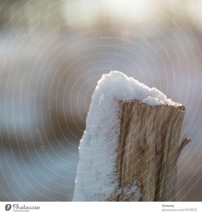 Häubchen Natur Winter kalt Umwelt Wiese Schnee Holz Eis Feld Vergänglichkeit Schönes Wetter Frost Holzpfahl schmelzen verweht Schneeschmelze