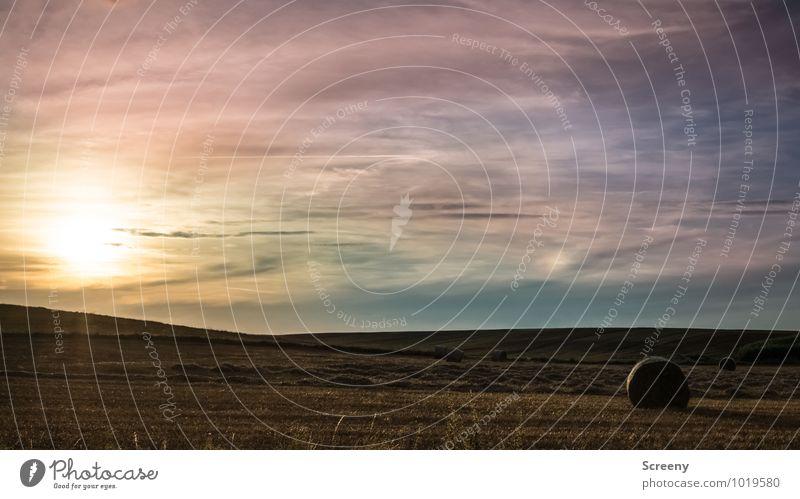 Letztes Sommerlicht Umwelt Natur Landschaft Pflanze Himmel Wolken Sonne Sonnenaufgang Sonnenuntergang Sonnenlicht Herbst Schönes Wetter Nutzpflanze Feld