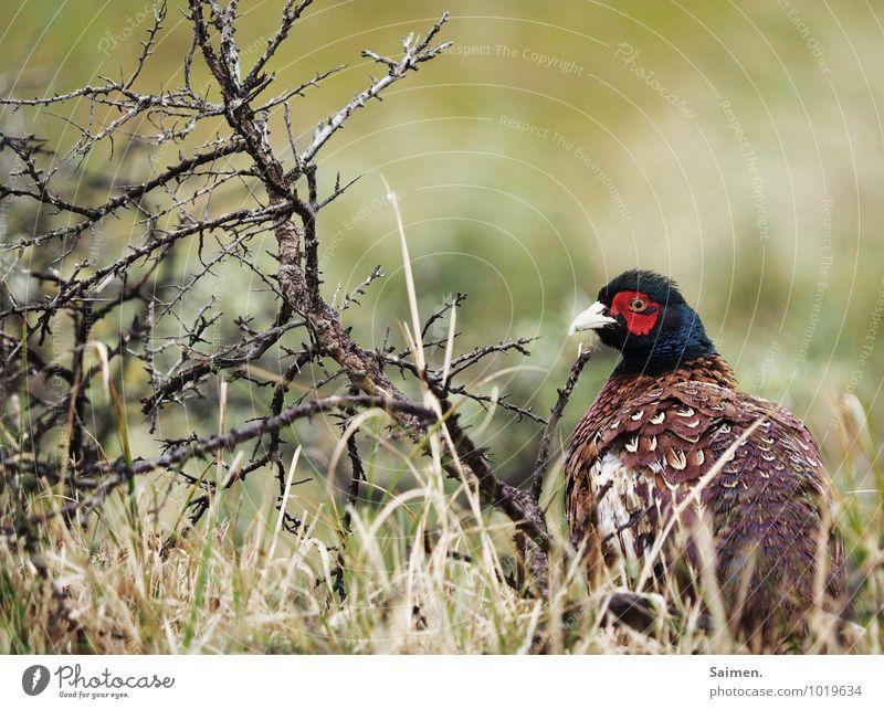 lonesome Natur Pflanze schön Einsamkeit Tier Umwelt Traurigkeit Wiese natürlich Stimmung Vogel elegant Wildtier Feder Hoffnung Sehnsucht