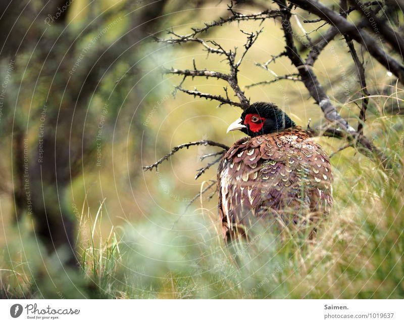schüchtern Umwelt Natur Wiese Tier Wildtier Vogel Tiergesicht 1 Blick ästhetisch natürlich schön grün rot Stimmung Erfolg Schutz Einsamkeit Scham Angst