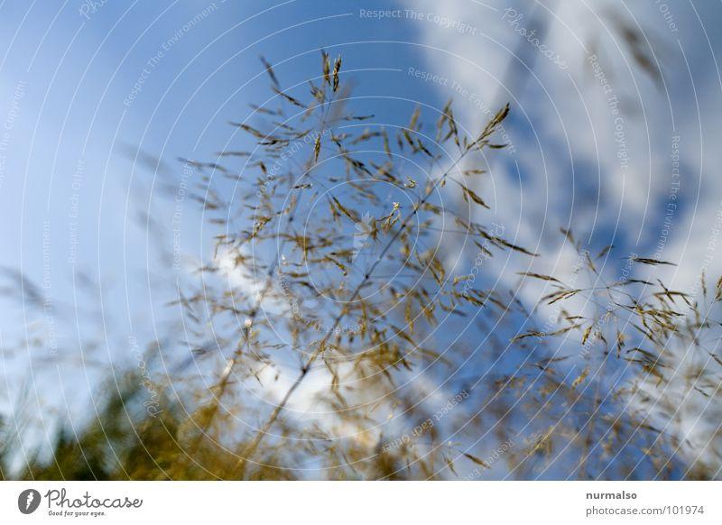 leicht wie ein Grassamen fein luftig Freude Himmel blau Samen frei im Gras liegen